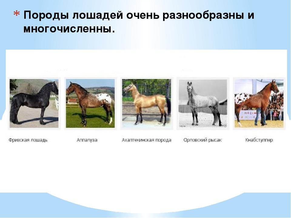 Породы лошадей очень разнообразны и многочисленны.