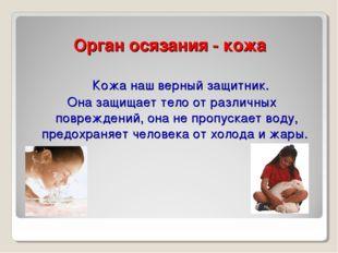 Орган осязания - кожа Кожа наш верный защитник. Она защищает тело от различны