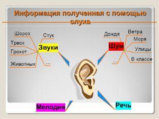 Информация полученная с помощью слуха