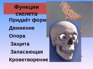 Функции скелета Придаёт форму Движение Опора Защита Запасающая Кроветворение
