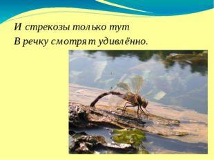 И стрекозы только тут В речку смотрят удивлённо.