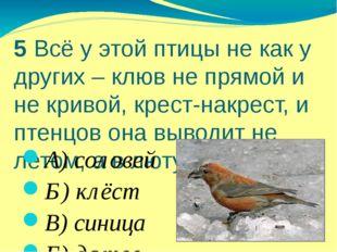 5 Всё у этой птицы не как у других – клюв не прямой и не кривой, крест-накрес