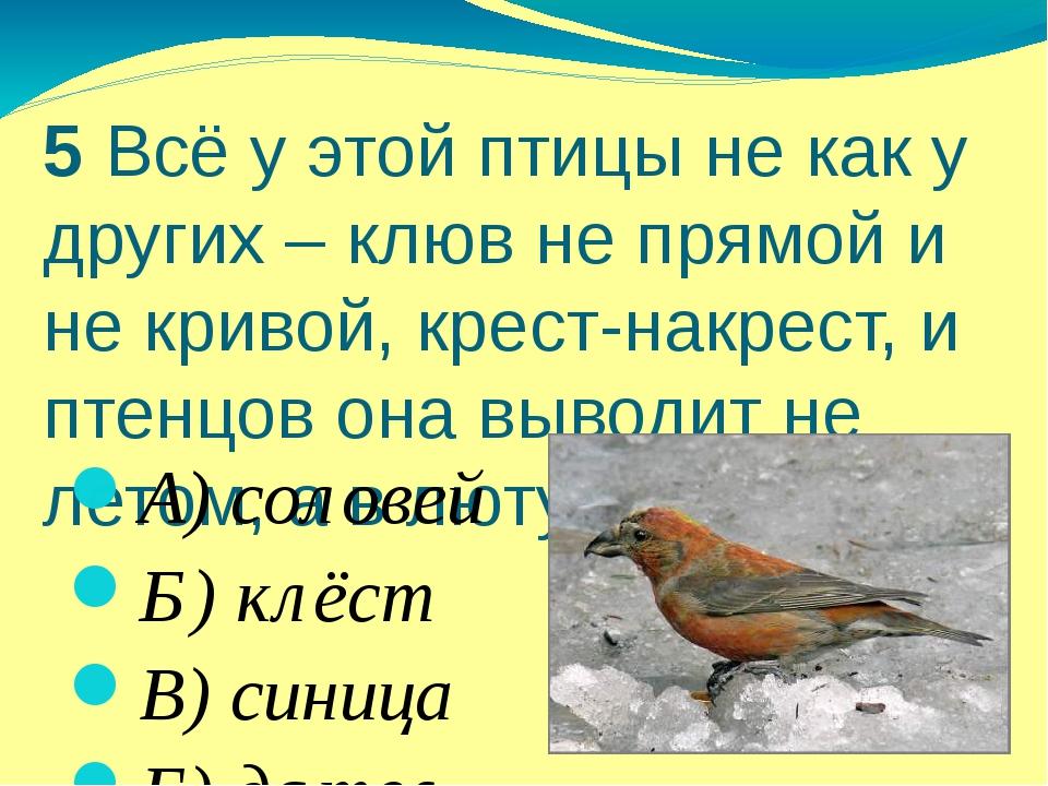 5 Всё у этой птицы не как у других – клюв не прямой и не кривой, крест-накрес...