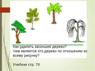 Как удалить засохшее дерево? Чем является это дерево по отношению ко всему ри