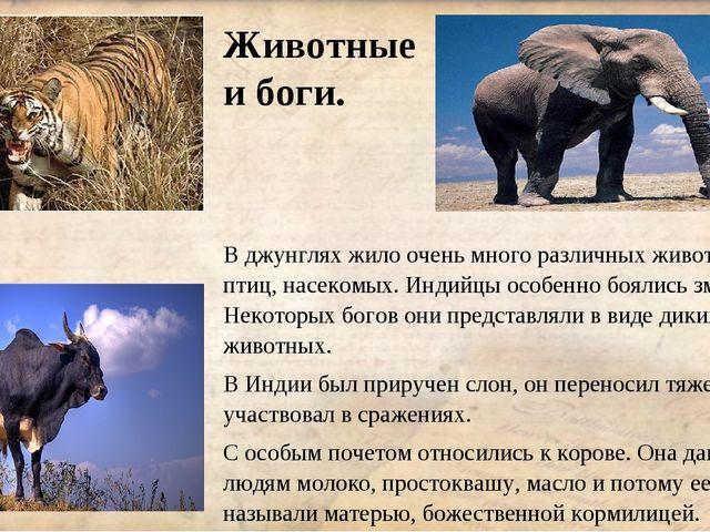 Животные и боги. В джунглях жило очень много различных животных, птиц, насеко...
