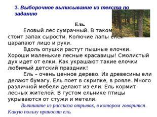 Ель. Еловый лес сумрачный. В таком лесу всегда стоит запах сырости. Колючие