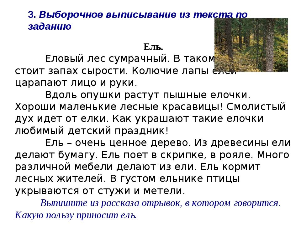 Ель. Еловый лес сумрачный. В таком лесу всегда стоит запах сырости. Колючие...