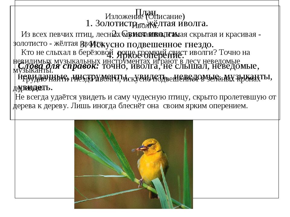 Изложение (Описание) Иволга. Из всех певчих птиц, лесных музыкантов, самая с...
