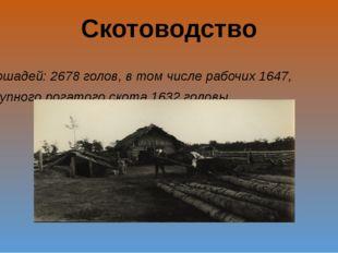 Скотоводство Лошадей: 2678 голов, в том числе рабочих 1647, крупного рогатого