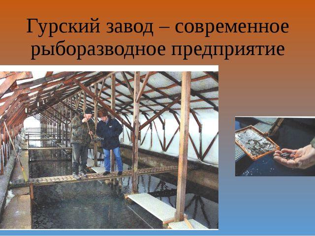 Гурский завод – современное рыборазводное предприятие