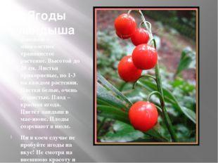 Ягоды ландыша Ландыш – многолетнее травянистое растение. Высотой до 20 см. Ли