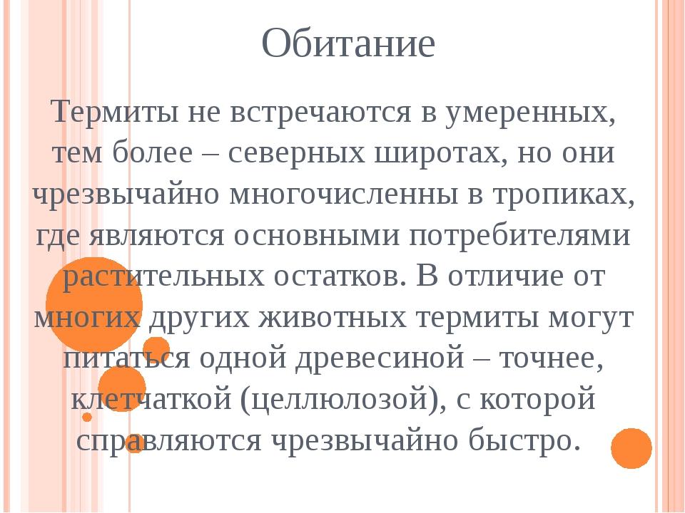 Обитание Термиты не встречаются в умеренных, тем более – северных широтах, но...