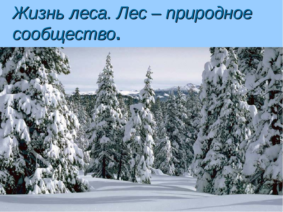 Жизнь леса. Лес – природное сообщество.