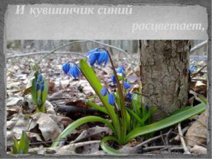 И кувшинчик синий расцветает,