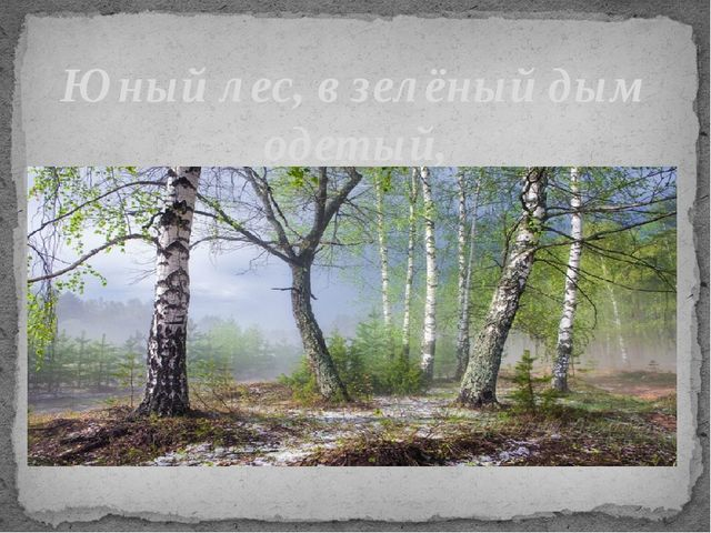 Юный лес, в зелёный дым одетый, Тёплых гроз нетерпеливо ждёт;