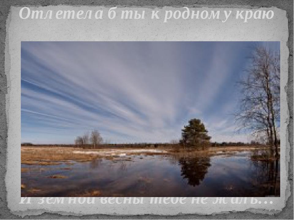 Отлетела б ты к родному краю И земной весны тебе не жаль…