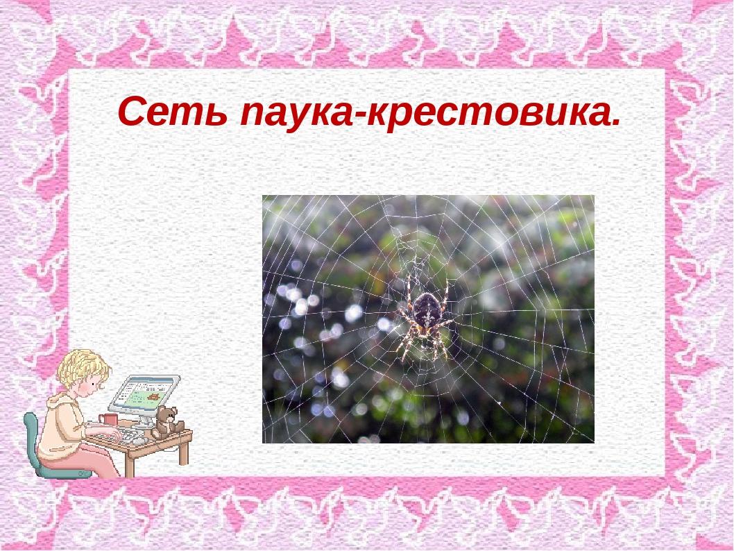 Сеть паука-крестовика.