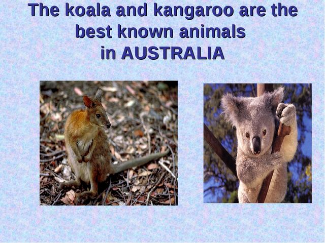 The koala and kangaroo are the best known animals in AUSTRALIA