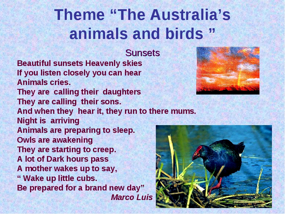"Theme ""The Australia's animals and birds "" Sunsets Beautiful sunsets Heavenly..."