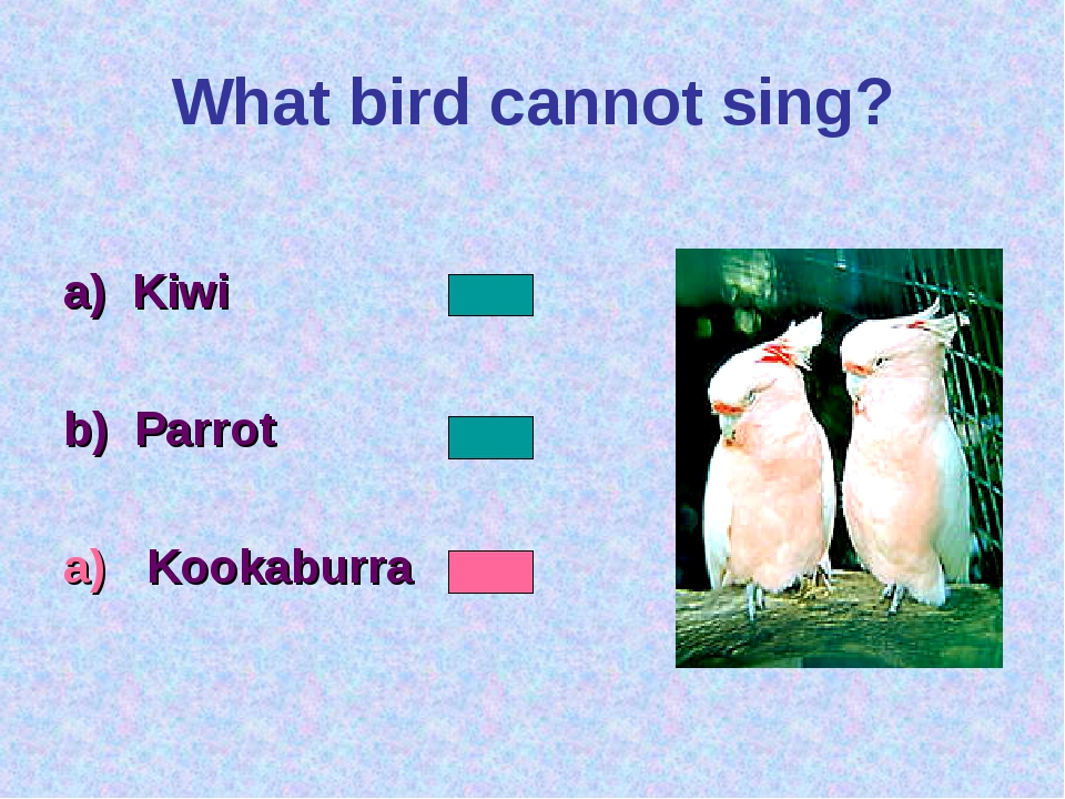 What bird cannot sing? a) Kiwi b) Parrot a) Kookaburra