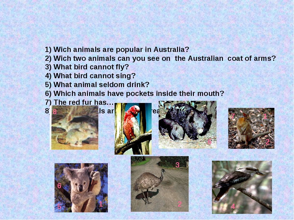 1) Wich animals are popular in Australia? 2) Wich two animals can you see on...