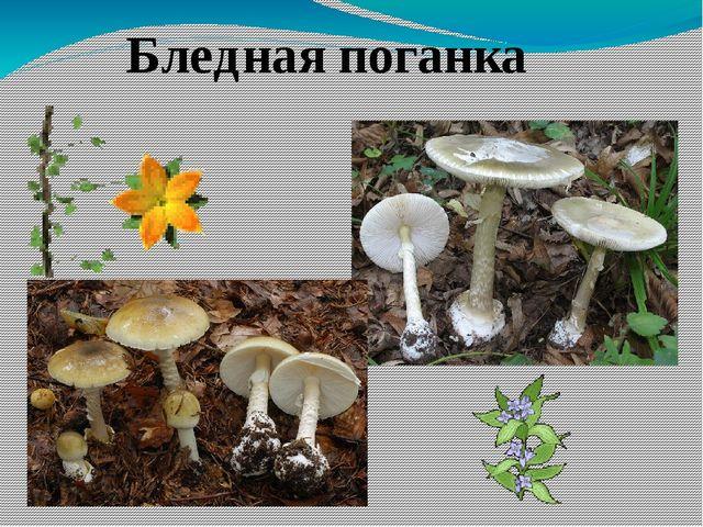 Памятка сбора грибов