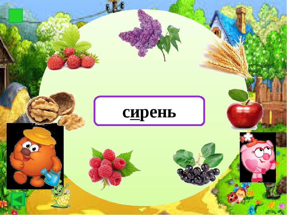 Картоф картофель Картоф малина
