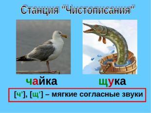 чайка щука [ч'], [щ'] – мягкие согласные звуки