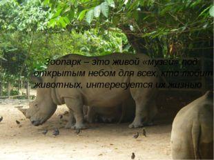 Зоопарк – это живой «музей» под открытым небом для всех, кто любит животных,