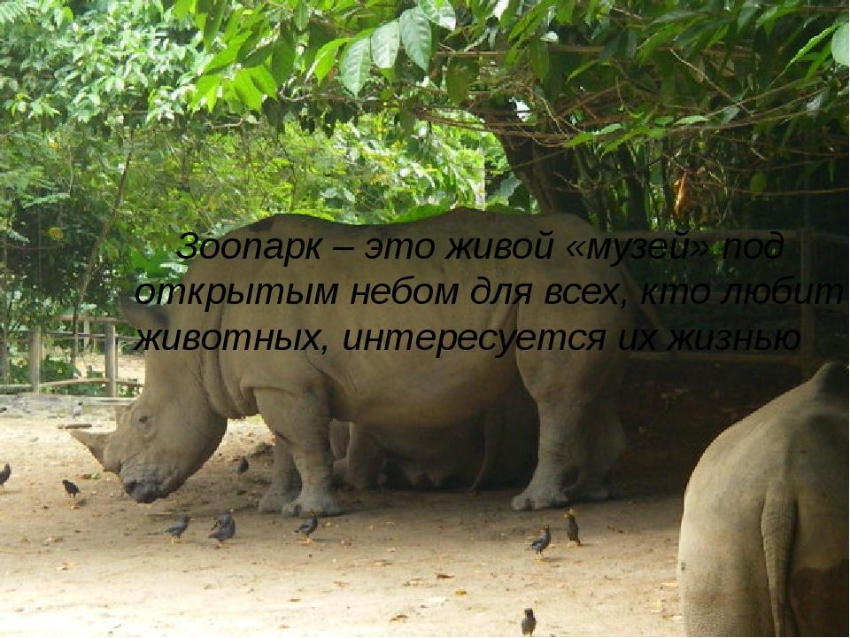 Зоопарк – это живой «музей» под открытым небом для всех, кто любит животных,...