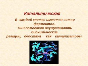 Каталитическая В каждой клетке имеются сотни ферментов. Они помогают осуществ