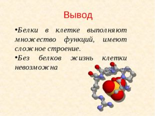 Вывод Белки в клетке выполняют множество функций, имеют сложное строение. Без