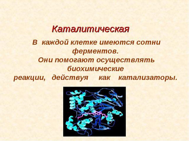 Каталитическая В каждой клетке имеются сотни ферментов. Они помогают осуществ...