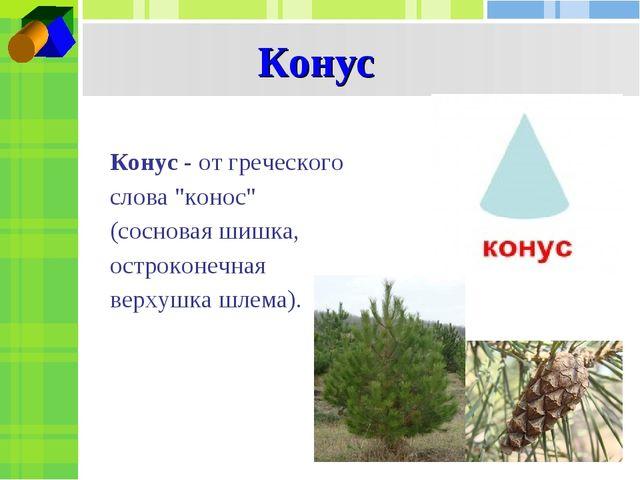 """Конус Конус - от греческого слова """"конос"""" (сосновая шишка, остроконечная верх..."""