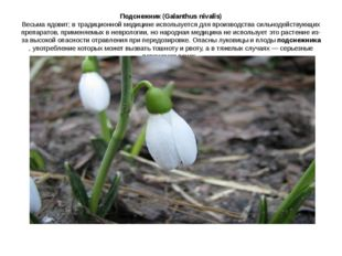 Подснежник (Galanthus nivalis) Весьма ядовит; в традиционной медицине использ