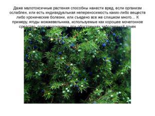 Даже малотоксичные растения способны нанести вред, если организм ослаблен, ил