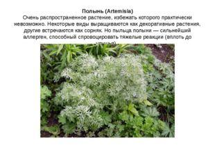 Полынь (Artemisia) Очень распространенное растение, избежать которого практич