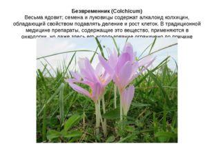 Безвременник (Colchicum) Весьма ядовит; семена и луковицы содержат алкалоид к