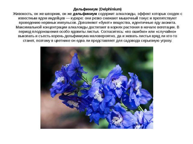Дельфиниум (Delphinium) Живокость, он же шпорник, он жедельфиниумсодержит а...