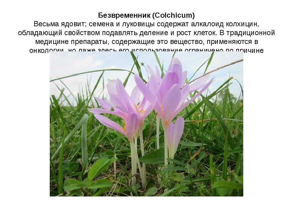 Безвременник (Colchicum) Весьма ядовит; семена и луковицы содержат алкалоид к...