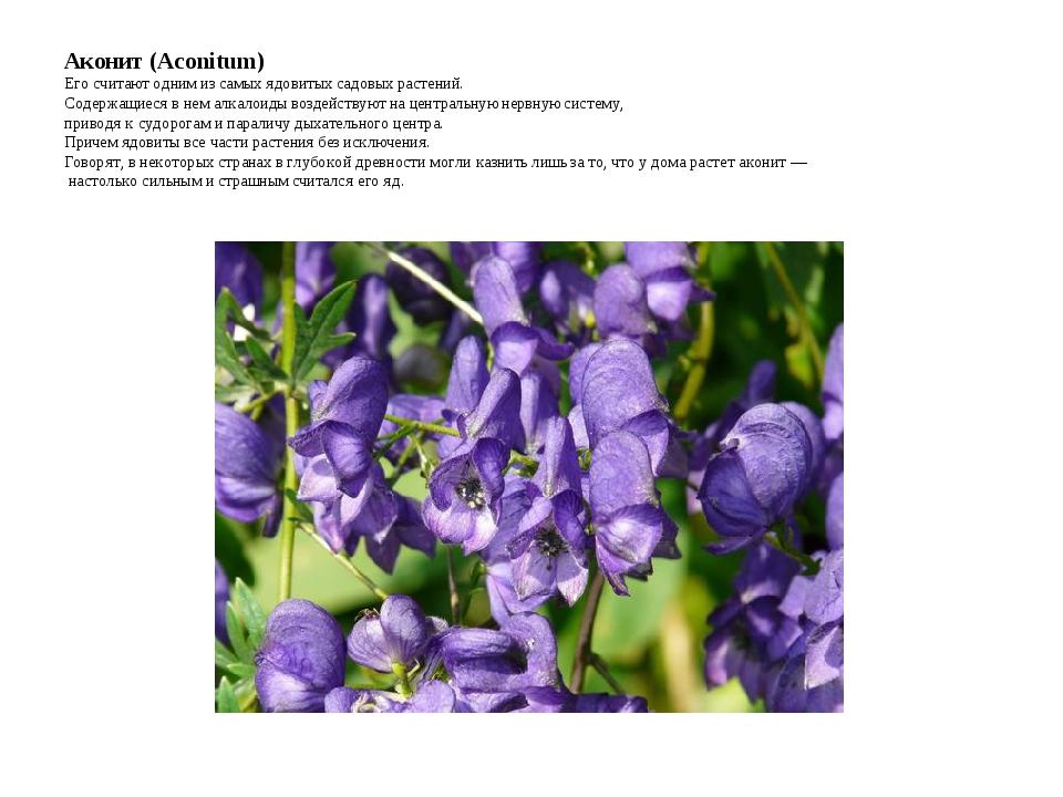 Аконит (Aconitum) Его считают одним из самых ядовитых садовых растений. Содер...