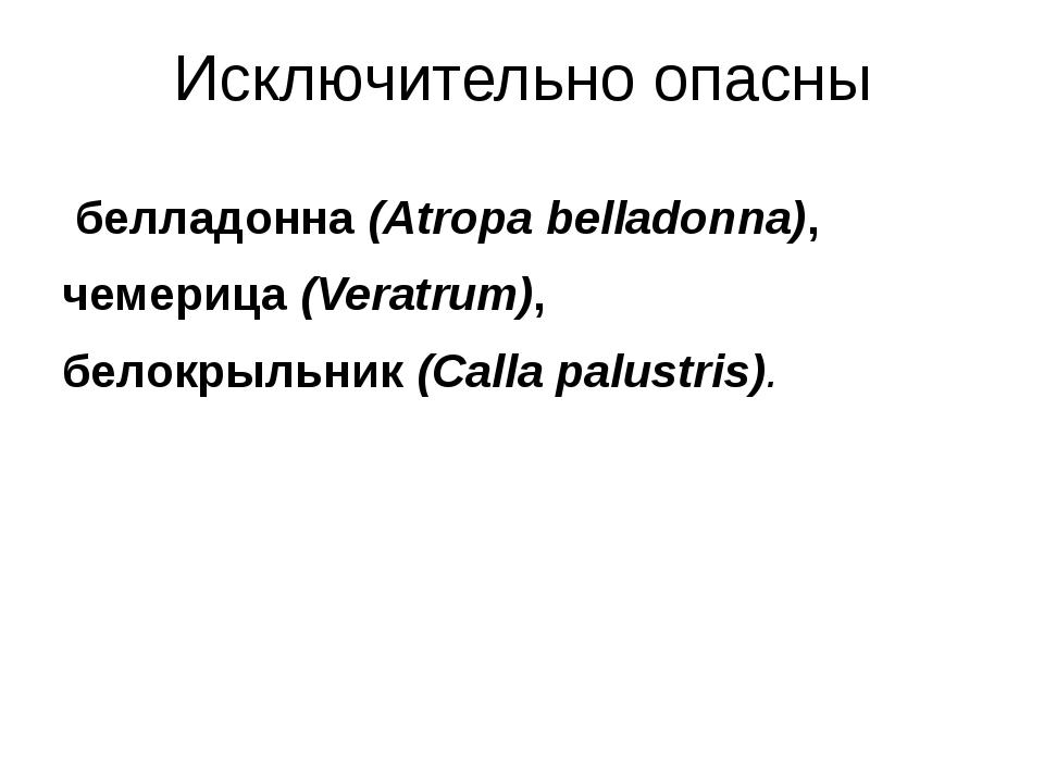 Исключительно опасны белладонна(Atropa belladonna), чемерица(Veratrum),...