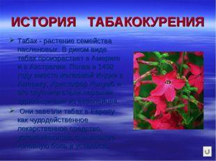 ИСТОРИЯ ТАБАКОКУРЕНИЯ Табак - растение семейства пасленовых. В диком виде таб