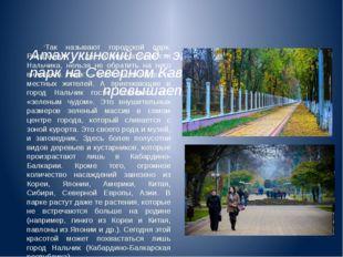 Атажукинский сад - это самый крупный парк на Северном Кавказе. Его площадь п