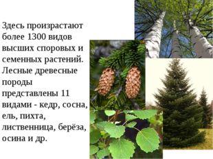 Здесь произрастают более 1300 видов высших споровых и семенных растений. Лесн