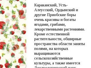 Караканский, Усть-Алеусский, Ордынский и другие Приобские боры очень красивы