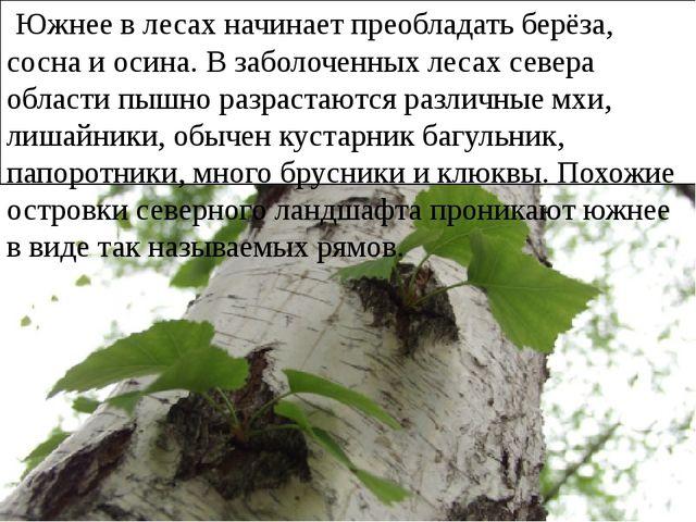 Южнее в лесах начинает преобладать берёза, сосна и осина. В заболоченных лес...