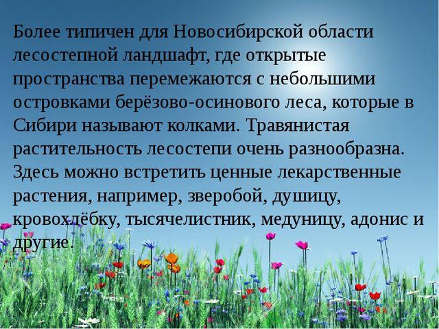 Более типичен для Новосибирской области лесостепной ландшафт, где открытые п...