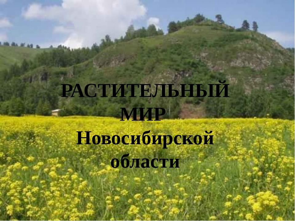РАСТИТЕЛЬНЫЙ МИР Новосибирской области