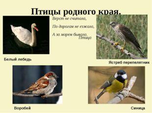 Птицы родного края. Верст не считала, По дорогам не езжала, А за морем бывала